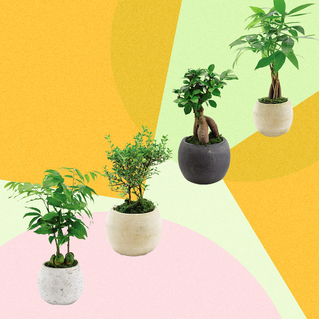 Four New Plants Are Arriving at Aldi This Month, and I Want Them All